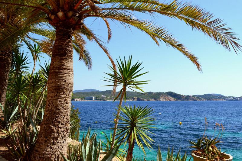 Palmen und Wasser